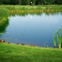 A view over the pond at at Clyde River Golf Club